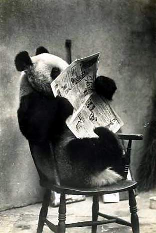 Reading Newspaper - Love reading