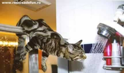 cat takeing bath - funnycat