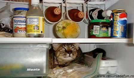 Cat foof - cat food