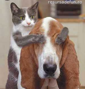 how is it? - dog and cat
