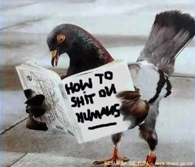 how to shi.....t on humans - bird