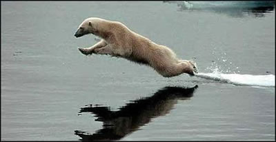 flying bear - bear