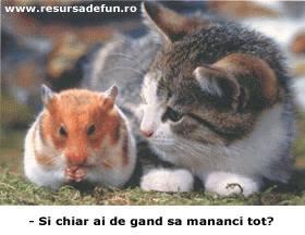 best friends - friends