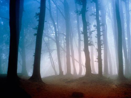 Morning Light - 1600x1200 - ID 41666 - PREMIUM - Destination - Morning Light - 1600x1200 - ID 41666 - PREMIUM............ Best locations from around the world ... Truly an adventurer's paradise...High Resolution Photography