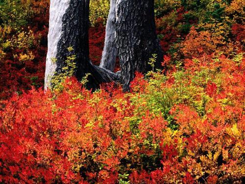 Mount Baker, Washington - 1600x1200 - ID 4060 - Destination - Mount Baker, Washington - 1600x1200 - ID 4060............ Best locations from around the world ... Truly an adventurer's paradise...High Resolution Photography