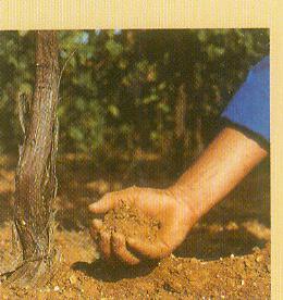 Soil - Soil