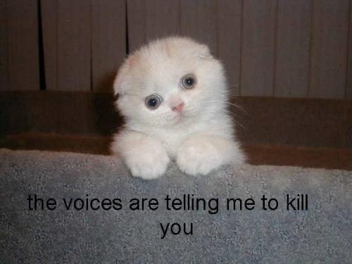 kitty hears voices