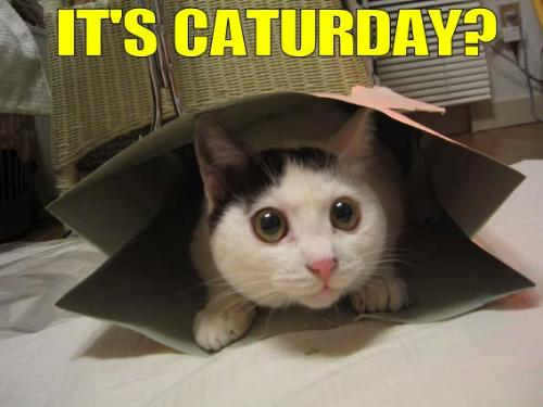 Its caturday? - Its CATURDAY!! POST SOME F'IN CAT!