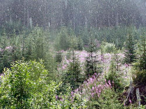 Rain - Here is a picture I took down an old abandon logging road when it was raining when the sun was out lol.