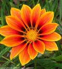 Flower - This is a very beautiful yellow flower.