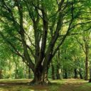 trees - trees