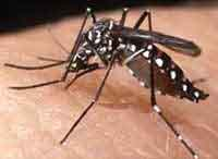 aedes - sedes aegpty