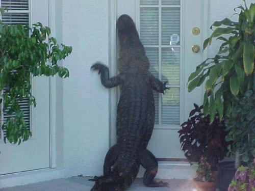 example of wild animals attacking homes - what will you do?