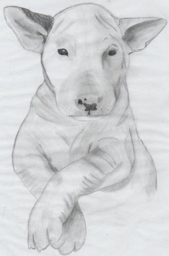 Drawing dog - Drawing of my Pup!
