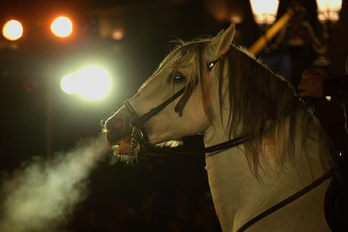 El Duque II - AN IMAGE SHOWING PHOTO OF A HORSE!