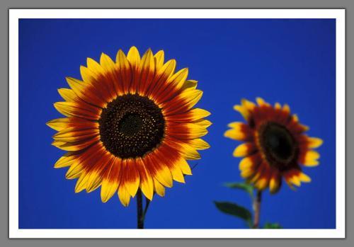 Flower in Garden - Flower in Garden
