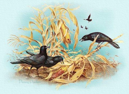 crow indians - crow indians