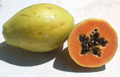Papaya - The papaya, also known as mamão, tree melon, fruta bomba, lechosa (Venezuela, Puerto Rico, the Philippines and the Dominican Republic), or pawpaw is the fruit of the tree Carica papaya, in the genus Carica. It is a small unbranched tree, the single stem growing to 5-10 m tall, with the spirally arranged leaves confined to the top of the trunk; the lower trunk is conspicuously scarred with the leaf scars of where older leaves and fruit were borne. The leaves are large, 50-70 cm diameter, deeply palmately lobed with 7 lobes. The flowers are produced in the axils of the leaves, maturing into the large 15-45 cm long, 10-30 cm diameter fruit. The fruit is ripe when it feels soft (like a ripe avocado or a bit softer) and its skin has attained an amber to orange hue.
