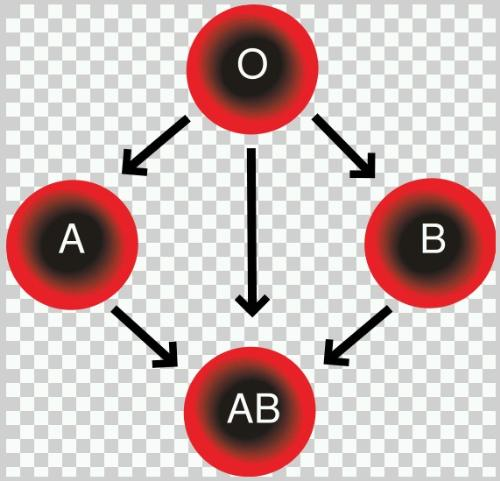 Blood Compatibility - Diagram showing blood group compatibility for transfusion purposes. Created by me on Adobe Illustrator 8/24/06 and released into public domain