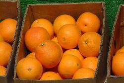 orange - orah