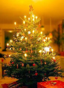 Christmas Tree -  One of the symbols of Christmas!