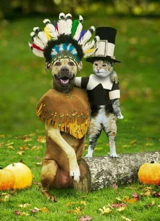 Dog & Cat pilgrims - Dog & Cat pilgrims
