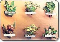 Ayurveda ( The Indian Medical Science ) - Ayurveda ( The Indian Medical Science )