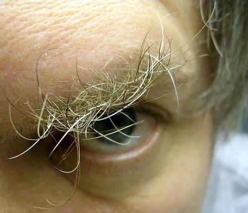 Man's Eyebrow - Wild Eyebrow