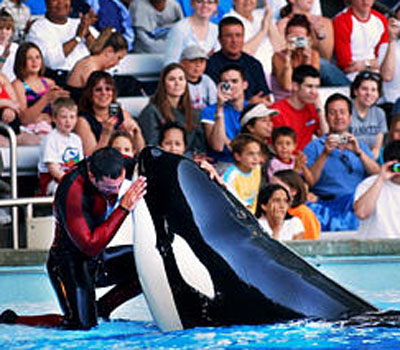 Whale and his trainer at Sea World - whale trainer