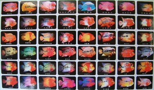 Oscar Fish Teeth moreover Blue Tiger Oscar Fish further Baby Oscar Fish Eggs as well Aquarium Setup For Flowerhorn additionally Huge Oscar Fish. on oscar cichlid eggs
