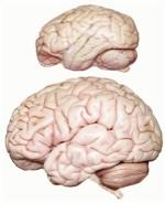 Brain - vrain