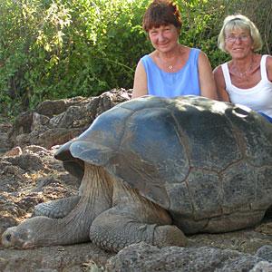 turtoise - live long life