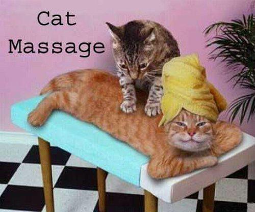 catmassage - catmassage