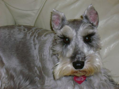 My Puppy Nikkel - Nikkel