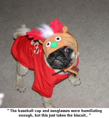 dog - dressed up dog
