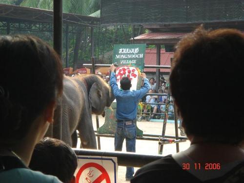 Elephant painting - 3 elephants doing painting