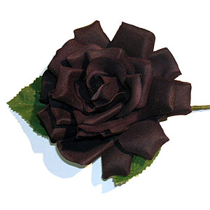 black rose - this is a flower that i like a lot. its the black rose