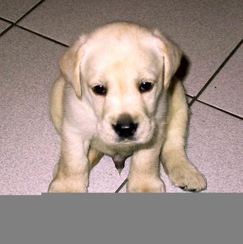 puppy - it just quet puppy ;)