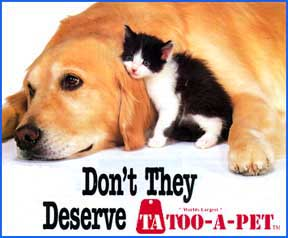 Pet - The picture shows a dog which wants a cat as a pet.