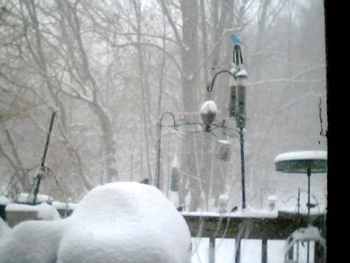 Bird Feeders - My neighbor doesn't want me to feed the birds.  Here are my birdfeeders on the deck after a storm.