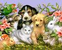 Pets - pets are adorable