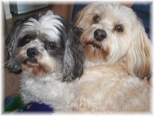 Penny & Poppy - My girls.