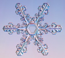 snow flake - snowflake in detail