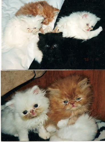 Cute Kittens - My husband once said to me anyone that couldn't love these must be pure evil.