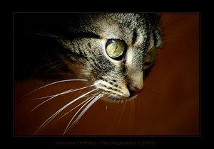 Benta - Our Cat