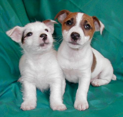 Puppy Love - The puppies who are in love.