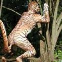 tiger - tiger person