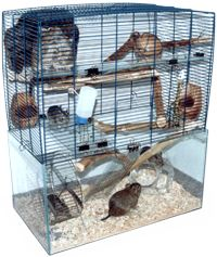 degu habitat - this picture is from the website degu org it is a font of information for anyone just starting out or thinking of getting a degu.