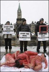 Stop the seal slaughter - Demonstration in Ottawa, Canada against the killing of seals.
