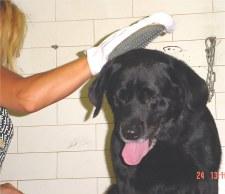 wash dog - WASH DOG photo.